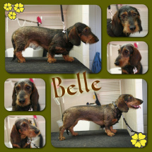 Belle-Collage