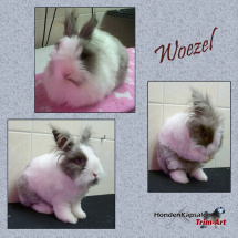 Collage-Woezel