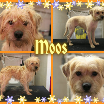 Moos-Collage