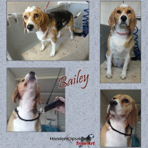 Bailey-Collage