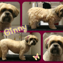 Ginny-Collage