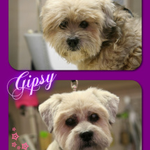 Gipsy-Collage