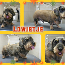 Lowietje-Collage