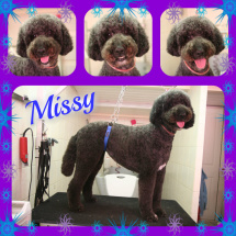 Missy-Collage