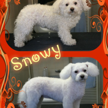 Snowy-collage2
